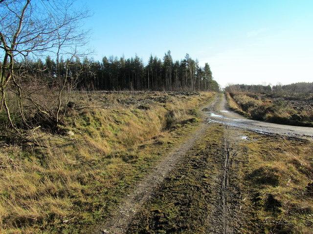 Track in High Moor Plantation