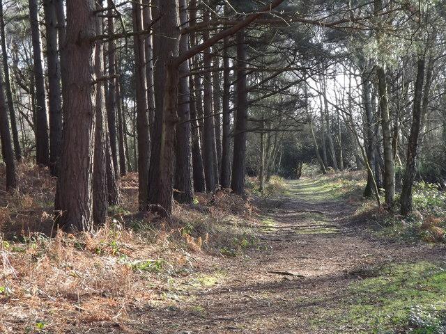 Footpath on Winterfold Heath
