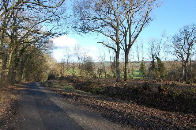 Woods off Mounts Lane