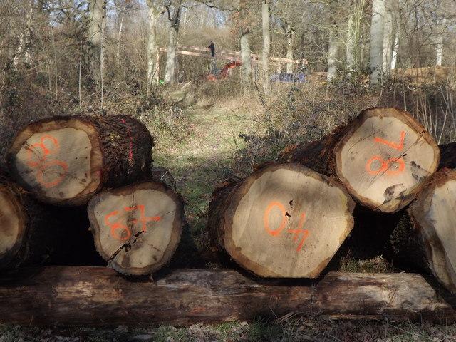 Logging Activity in South Copse