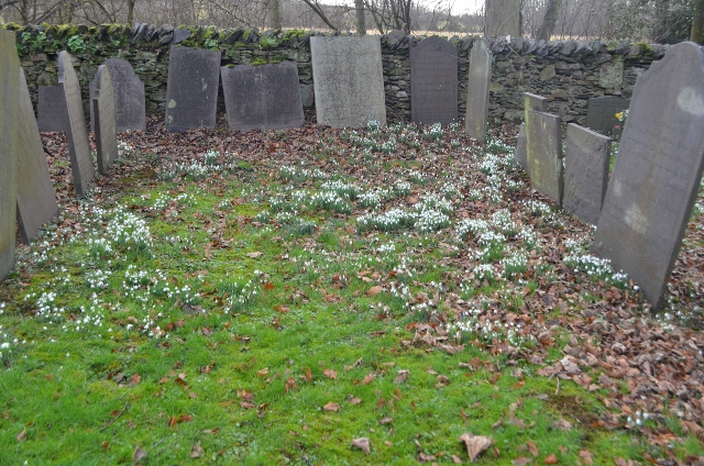 Snowdrops at Swithland Churchyard