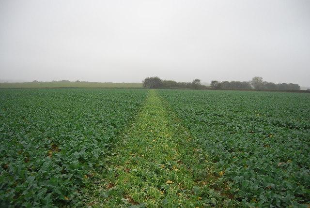 Footpath to Cadehill Wood