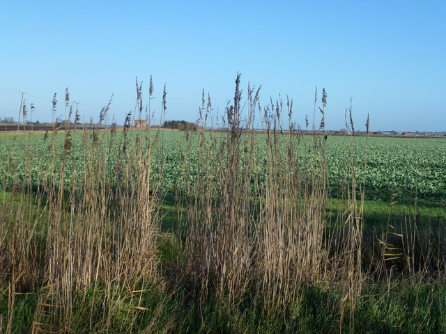 Gaunt Fen near Chatteris