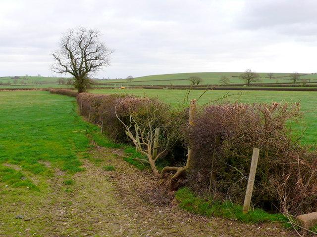 Hedgerow near Snitterfield.
