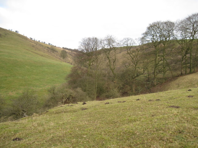 Deep  Dale  looking  up  to  Hanging  Grimston  Wold