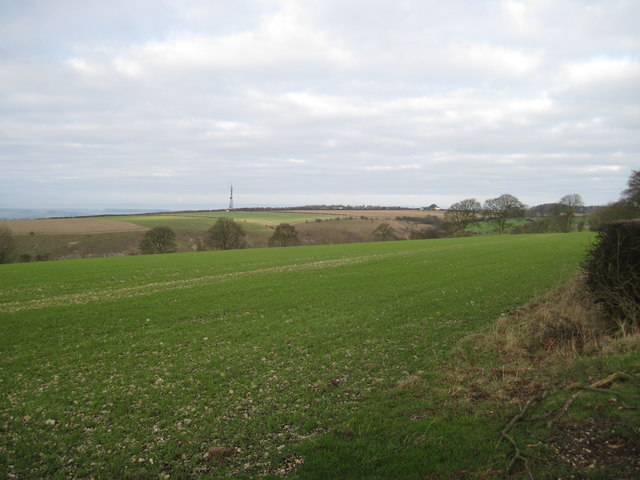 Winter  Barley  Hanging  Grimston  Wold