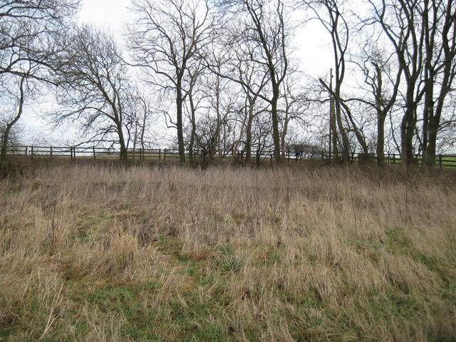 Disused  Pit  alongside  Roman  Road