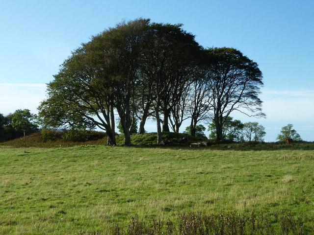 Tree covered mound near Killundine