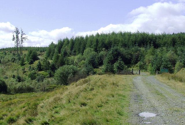 Forestry road into the Dalarwen Plantation, Ceredigion
