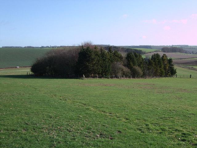 Plantation of trees near Old Barn
