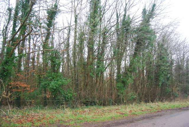 White Hill Wood