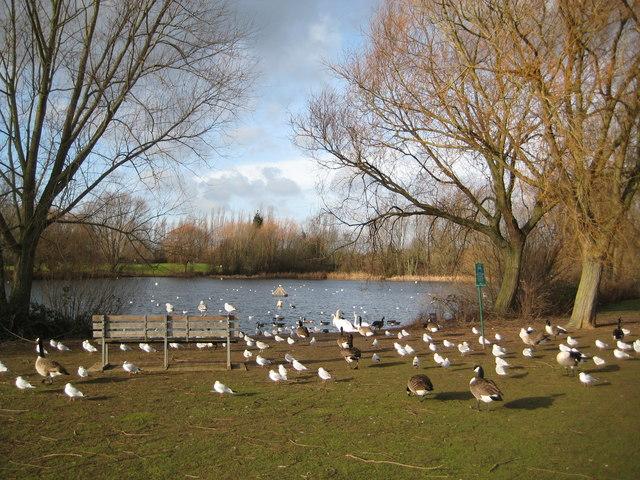 Orton Longueville: Osier Lake (2)