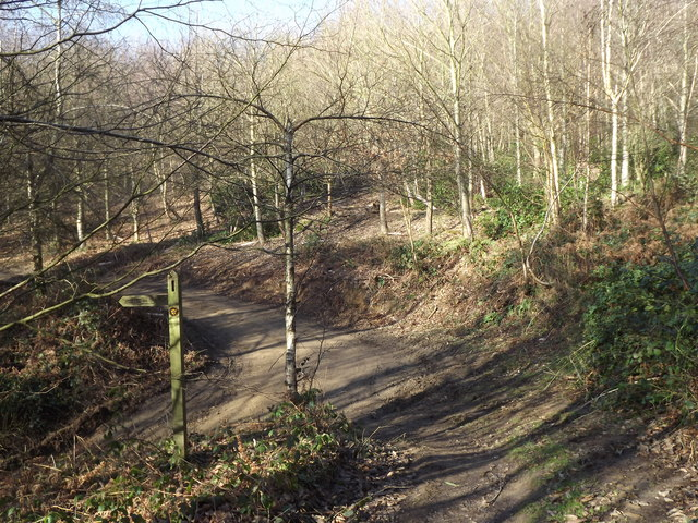 Greensand Way in Great Copse