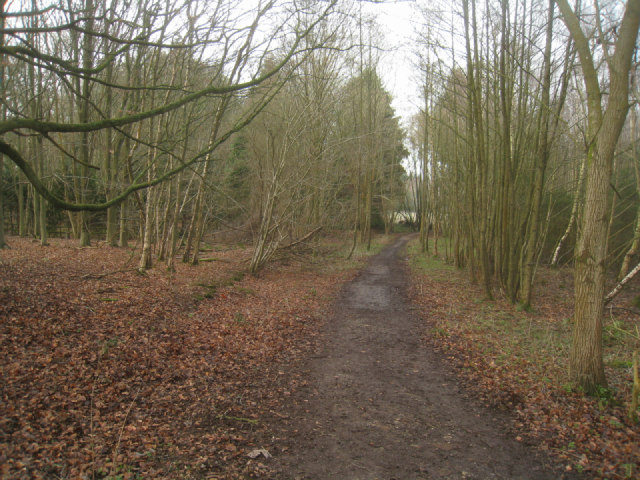 Footpath in to Sandford Woods