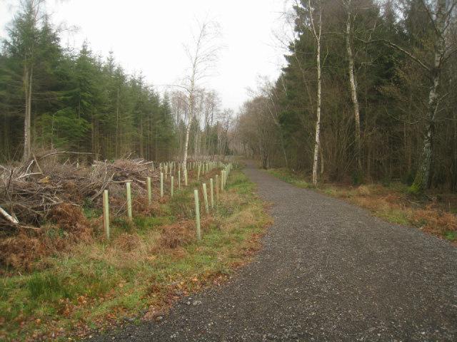 Forest track - Brock Copse