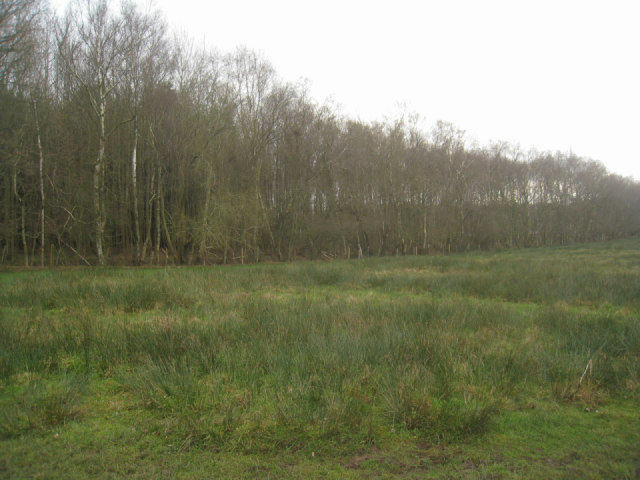 Frith Common / Sandford Woods