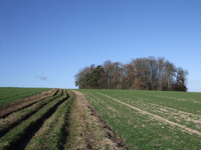 Circular plantation beside byway to Upper Upham