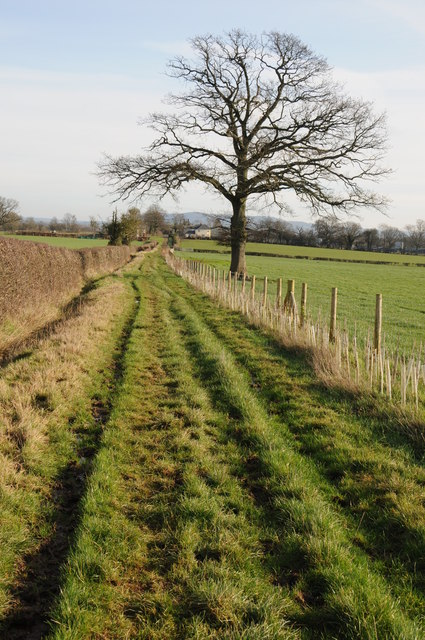The Herefordshire Trail near Eardisley