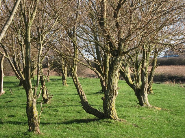 Trees by River Stour