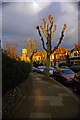 TQ2989 : Pollarded trees, Hornsey by Julian Osley