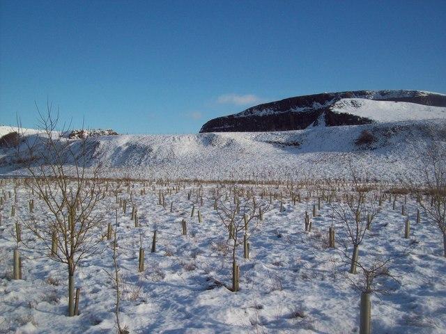 Plantation Alongside Eldon Hill Quarry