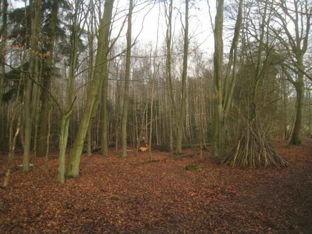 Corner of Brock Copse