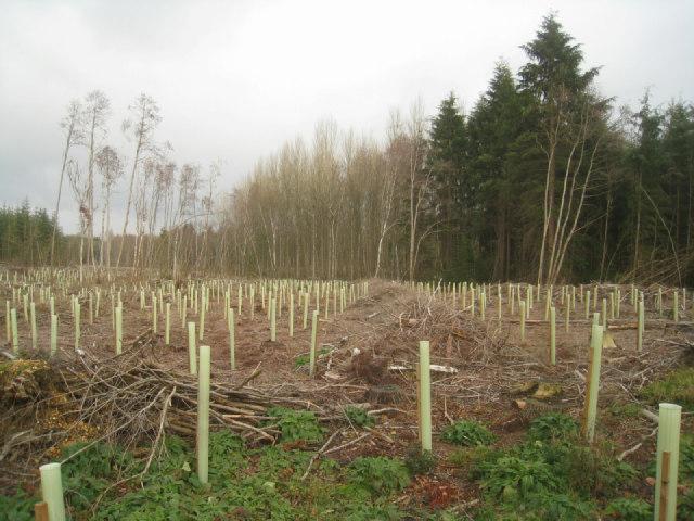 Not so many trees now