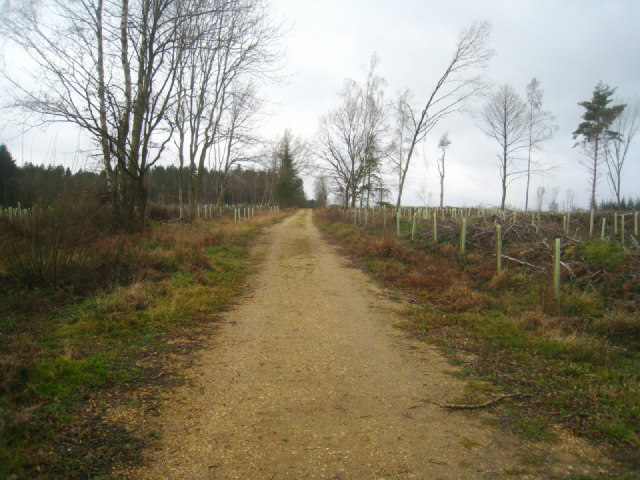 Track in Sandford Woods