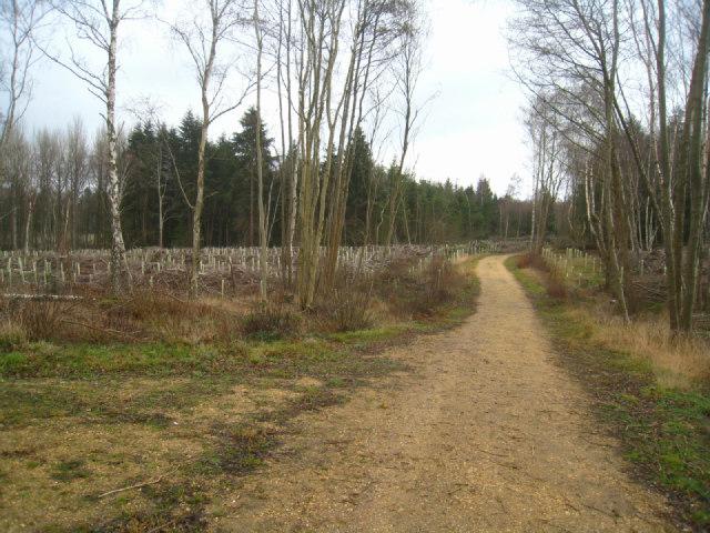 Track in Sandford Wood