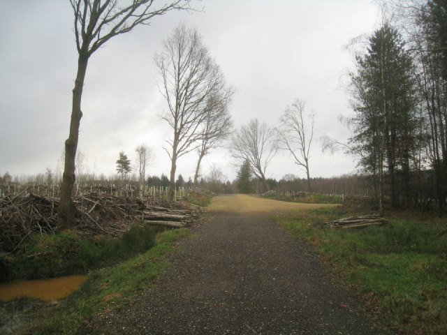 Sandford Wood (2012 version)