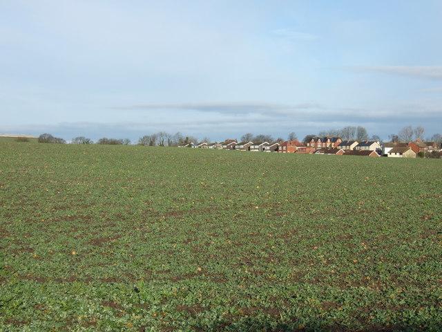 Farmland near Scholes