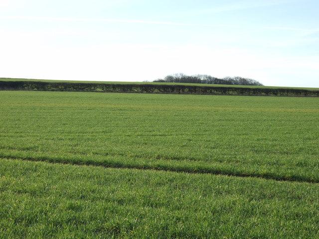 Farmland off Bog Lane