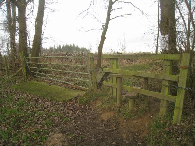 Entering Sandford Wood