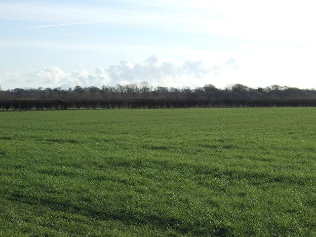 Farmland, Highfield Farm