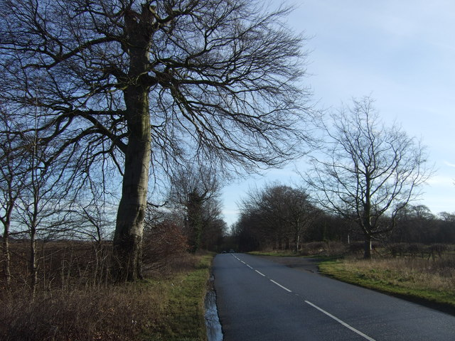 Cattle Lane towards Aberford