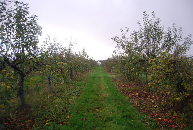 Footpath through the orchard