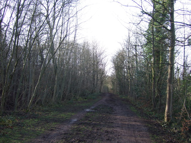 Bridleway towards Parlington