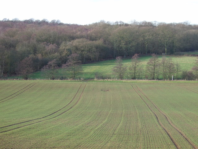 Farmland towards Rakes Wood