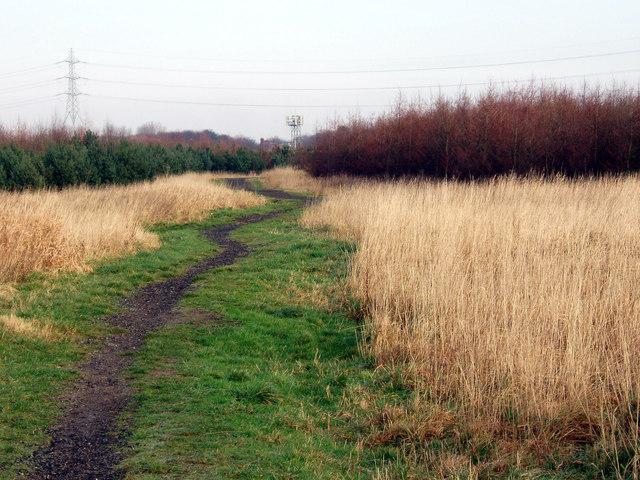 Pathway towards Jubilee Wood
