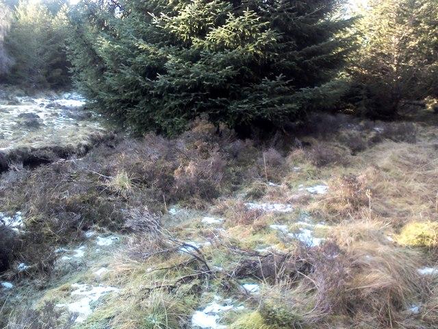 Balnaguard Burn tributary route