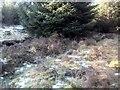 NN9249 : Balnaguard Burn tributary route by AllanKnaik
