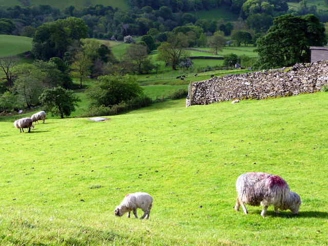 Sheep Grazing, Troutbeck, Cumbria