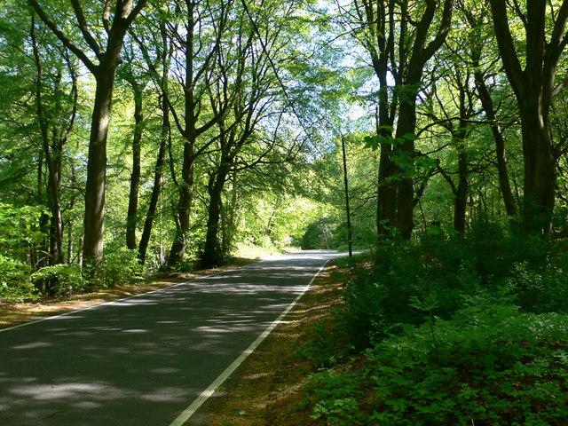Buckholt Road, south of Birdlip