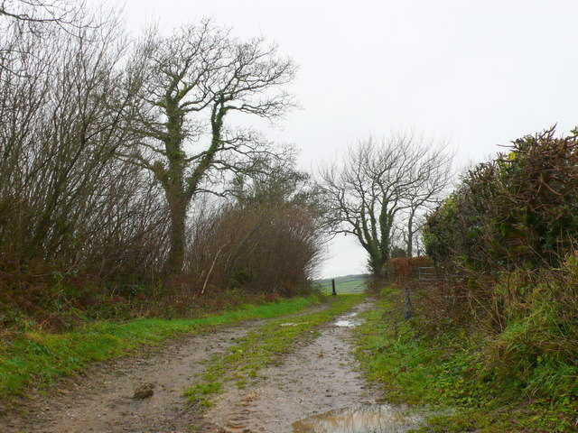 Track to Hooke