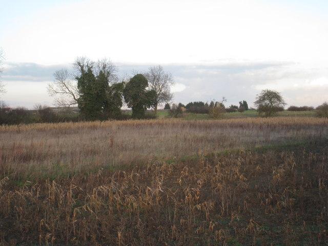 View towards Highwood Farm