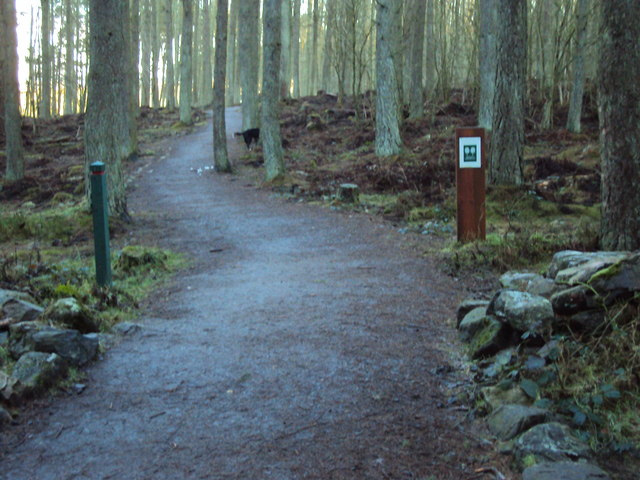 Footpath in Rotten o'Gairn Wood