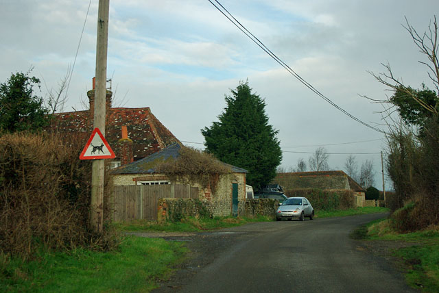 Beware cats on Binsted Lane