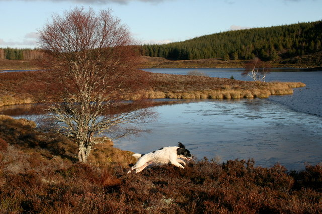A playful spaniel on the eastern shores of Loch Dallas