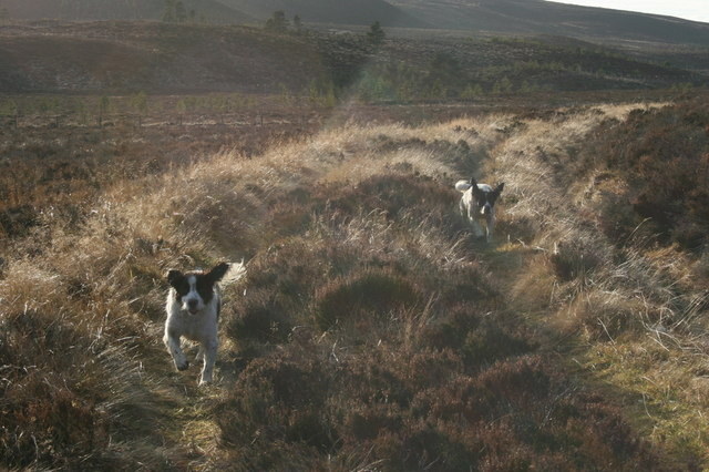 The track leading to Loch Dallas
