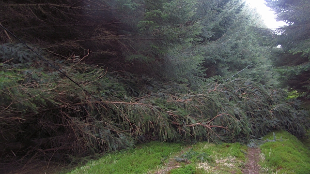 Storm damage, Watherston Wood